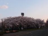 處處有驚喜追櫻踏雪之行(六)--山形縣霞城公園:P4227567.JPG