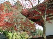 京都賞楓五日遊之二:高雄神護寺、高山寺:IMG_5285.JPG