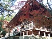 京都賞楓五日遊之二:高雄神護寺、高山寺:IMG_5288.JPG