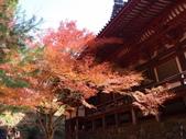 京都賞楓五日遊之二:高雄神護寺、高山寺:PB249424.JPG