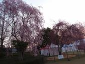 處處有驚喜追櫻踏雪之行(六)--山形縣霞城公園:P4227570.JPG