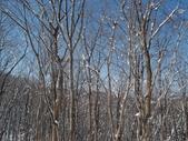 處處有驚喜追櫻踏雪之行(四)--十和田湖、奧入瀨溪:P4207094.JPG