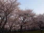 處處有驚喜追櫻踏雪之行(六)--山形縣霞城公園:P4227571.JPG