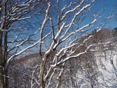 處處有驚喜追櫻踏雪之行(四)--十和田湖、奧入瀨溪:P4207098.JPG