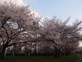 處處有驚喜追櫻踏雪之行(六)--山形縣霞城公園:P4227572.JPG