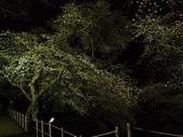 處處有驚喜追櫻踏雪之行(六)--山形縣霞城公園:P4217529.JPG
