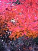 京都賞楓五日遊之二:高雄神護寺、高山寺:IMG_5272.JPG