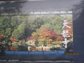 京都賞楓五日遊:嵐山、天龍寺、二尊院:aaa 358.jpg