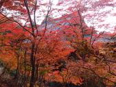 京都賞楓五日遊之二:高雄神護寺、高山寺:PB249429.JPG