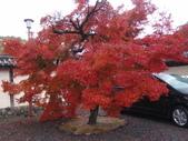 京都賞楓五日遊:嵐山、天龍寺、二尊院:PB259551.JPG