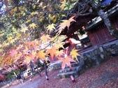 京都賞楓五日遊之二:高雄神護寺、高山寺:IMG_5271.JPG