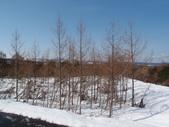 處處有驚喜追櫻踏雪之行(四)--十和田湖、奧入瀨溪:P4207079.JPG