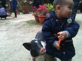 102/3/2台南乳牛的家:豬:給我吃一口