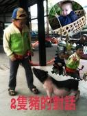 102/3/2台南乳牛的家:豬的對話