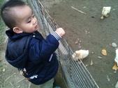 102/3/2台南乳牛的家:小鴨鴨