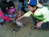 102/3/2台南乳牛的家:摸小白兔