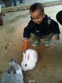 102/3/2台南乳牛的家:小兔子~吃飯囉