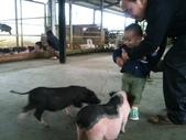 102/3/2台南乳牛的家:小豬~我怕怕