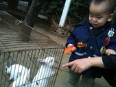 102/3/2台南乳牛的家:白兔我自己