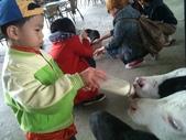 102/3/2台南乳牛的家:傑哥餵奶