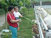 屏東萬丹~中元世紀牧場:最右邊的白羊,好像〝石膏羊〞唷
