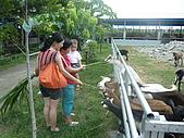 屏東萬丹~中元世紀牧場:巴著大姨不放的膽小鬼