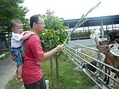屏東萬丹~中元世紀牧場:這對父子~爸爸背著張冠傑