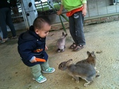 102/3/2台南乳牛的家:小幼愛兔子