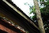 勝興車站、銅鑼杭菊:苗栗杭菊&勝興車站 095上傳.JPG