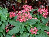 花卉:DSCF0007.JPG