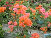 花卉:DSCF0008.JPG
