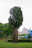 植物_樹&草:IMG_1999.jpg