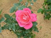花卉:DSCF0009.JPG