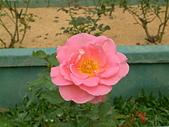 花卉:DSCF0010.JPG