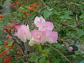 花卉:DSCF0011.JPG