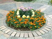 花卉:DSCF0012.JPG