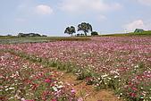 大溪花海農場:DPP_0929.JPG