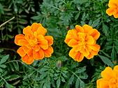 花卉:DSCF0014.JPG