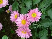 花卉:DSCF0015.JPG