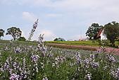 大溪花海農場:DPP_0930.JPG