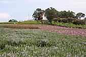 大溪花海農場:DPP_0932.JPG