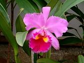 花卉:DSCF0017.JPG
