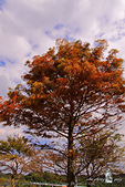 大湖公園:DPP_14956.jpg