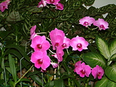 花卉:DSCF0018.JPG