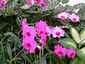 花卉:DSCF0019.JPG