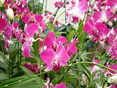 花卉:DSCF0020.JPG
