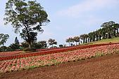 大溪花海農場:DPP_0939.JPG