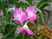 花卉:DSCF0021.JPG