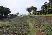大溪花海農場:DPP_0943.JPG
