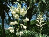花卉:DSCF0001.JPG